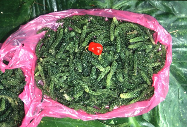 The green alga, Caulerpa for sale in a Fiji market