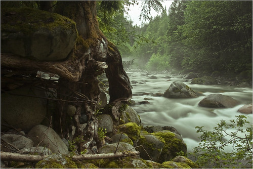 park tree rock vancouver creek river geotagged bravo north roots canyon lynn shore janusz eow leszczynski washedaway visiongroup frhwofavs geo:lon=123019624 geo:lat=49344236