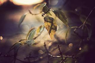 evening bokeh at 2 pm | by Elin Ivemo