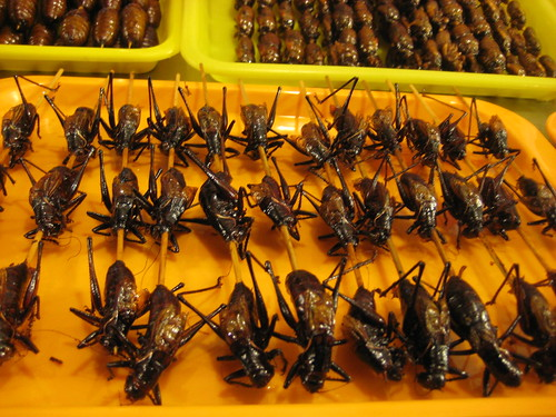 Crickets on a stick - yes, for eating | by TimShoesUntied