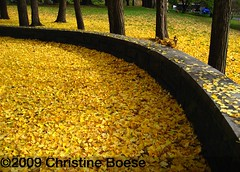 Fort Greene Fall Carpet | by Chris Boese