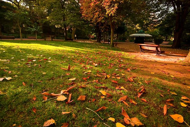 Ephemeral Autumn
