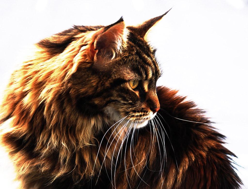 the Cat by Vinje