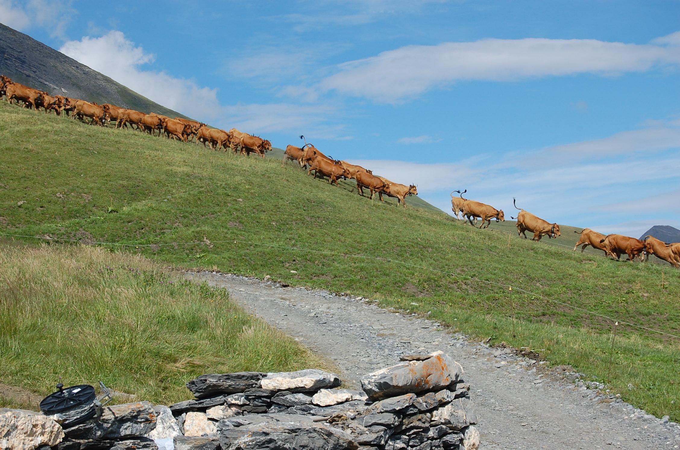 Séez, alpage Arpin ©P.Y Odin, Fondation Facim (26)