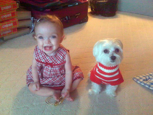 Merry Christmas from Maddie & Rigby! | by The Spohrs Are Multiplying...