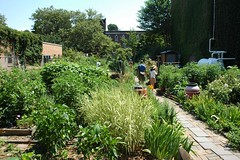 Hollenback Community Garden