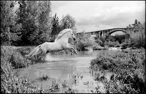 Templado1 templado un cheval de r ve une star comment flickr - Cheval de rebelle ...