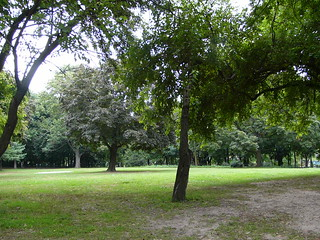 Open Area with Trees | by Marjorie Lipan