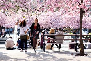 Spring Smell | by eugenijusr