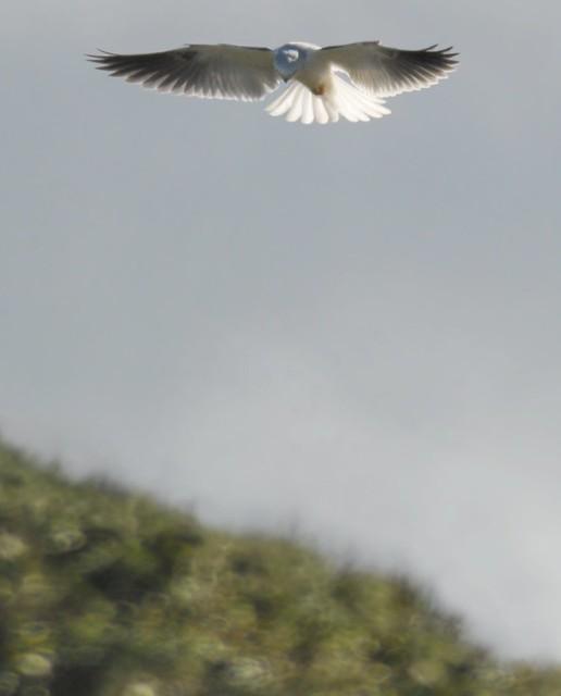 Hovering kite