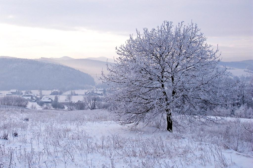 Mroźny poranek / Frosty morning