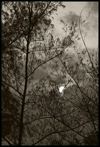 trees sunset bw cloudy silhouettes kerala grayscale hazy thrissur hiltop godsowncountry abovethehorizon rajeshvijayarajan vilangakunnu rajeshvijayarajanphotography rajeshvj rajeshonflickr gettyimagesindiaq4