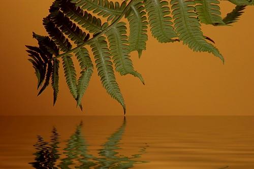 orange fern reflection green water flood background p2009c