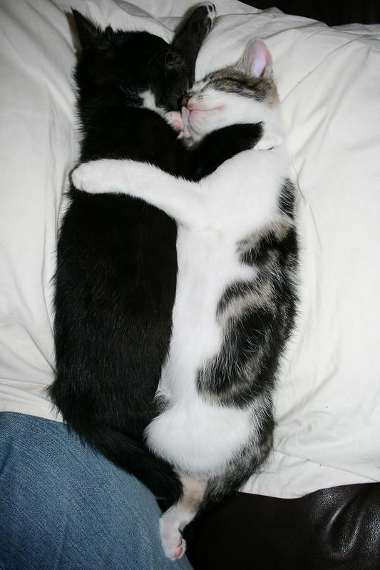 Sleepy Cuddles