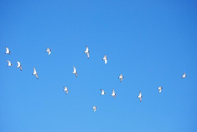 Kiten Ter Heijde Birds In The Sky Michel Kort Flickr