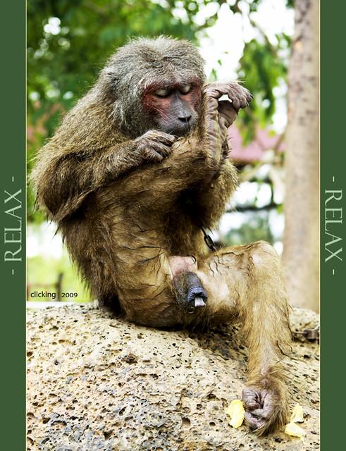 Monkey 06