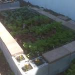 S10th box garden