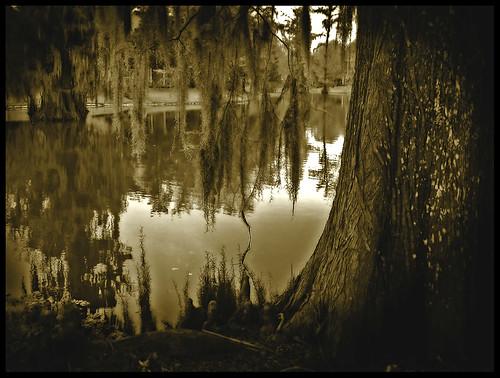 lake tree rouge moss louisiana baton