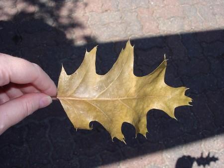 leaf-hand