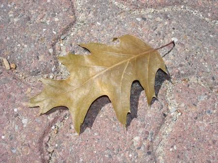 leaf-resting