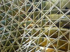 Esplanade lattice