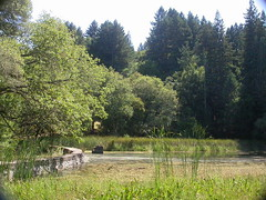 Lake at Jack London State Park, Sonoma
