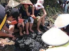 made mangrove seed