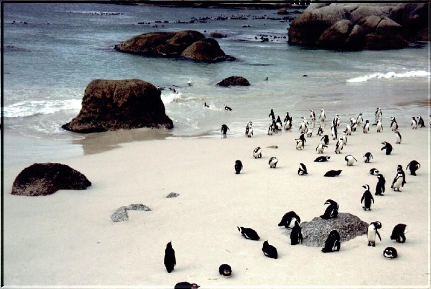 SA 00 Penguin Bay
