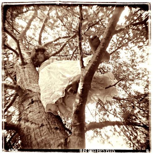 maddie tree | by Laura Burlton - www.lauraburlton.com
