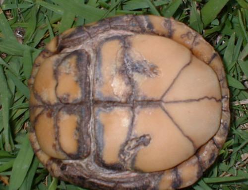 shell rot box bottom | Wendy | Flickr