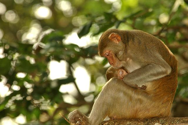 Monkey Love