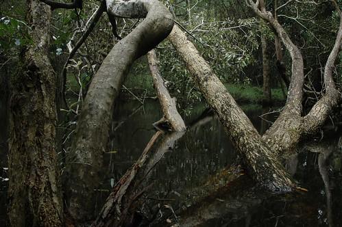 lake forest nikond70 kerala wayanad kuruvadweep