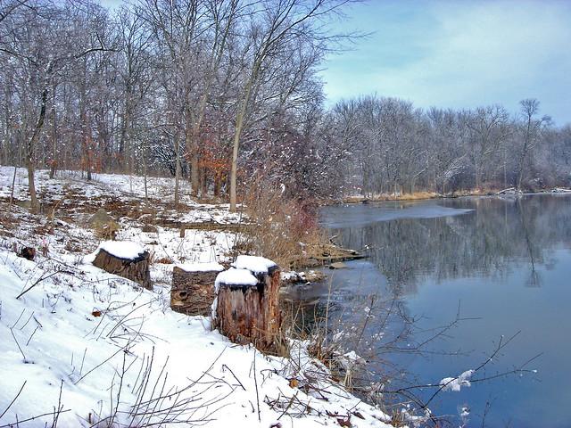 Mc Dowell Woods - Lake shore