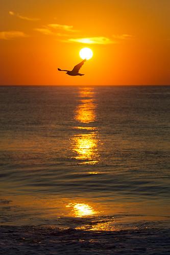 sunrise reflections md gull maryland oceancity oc laughinggull