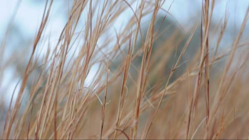 old grass 50mm video nikon texas east hd salem f18 d90