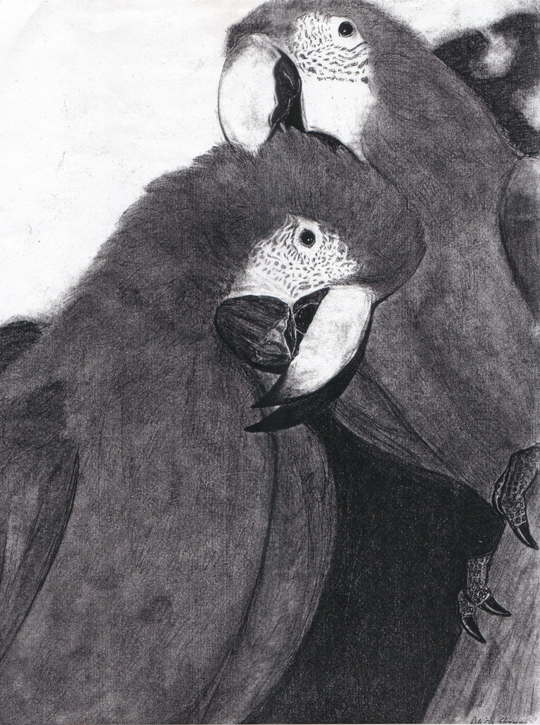 Love Birds Graphite Pencil Drawing Mechanical Pencil Alicia Stamm Flickr