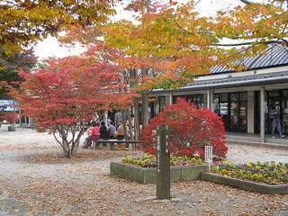 Autumn Leaves at the Michi-no-Eki (道の駅), Narusawa (鳴沢), Japan
