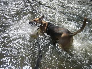Dog Taxi in Rock Creek | by Wayan Vota