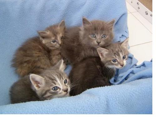 gattini bellissimi cercano casa roma regalasi a veri