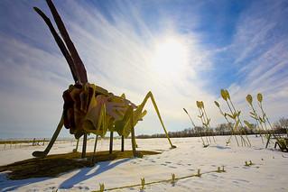 Grasshopper's Delight | by road triper