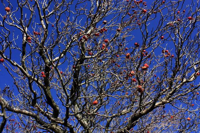 Le ragazze sono come le mele sugli alberi