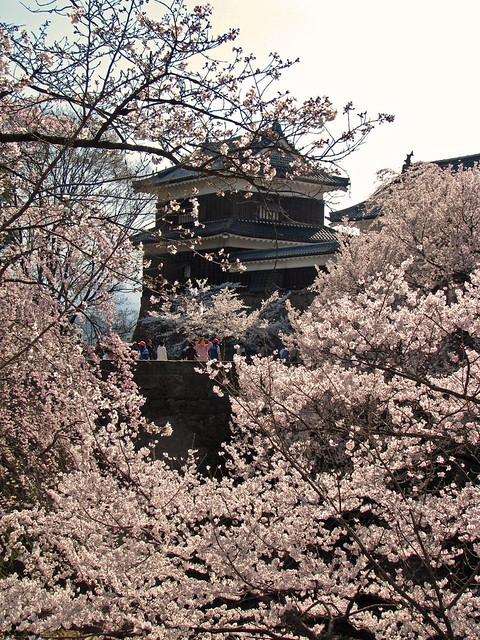 IMG_4953 Ueda Castle