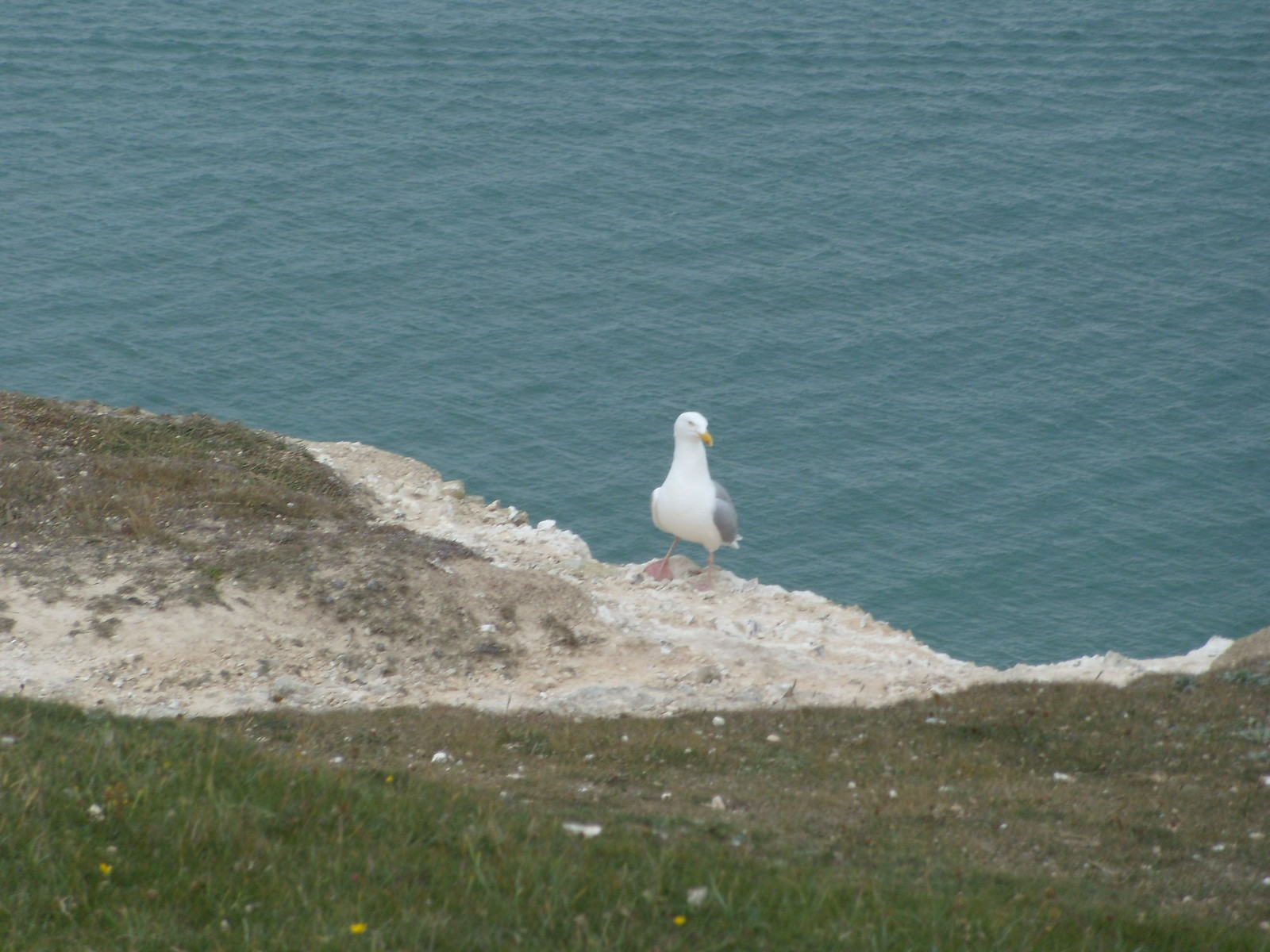 Bird Seaford to Eastbourne