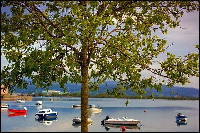 Árbol y barcas