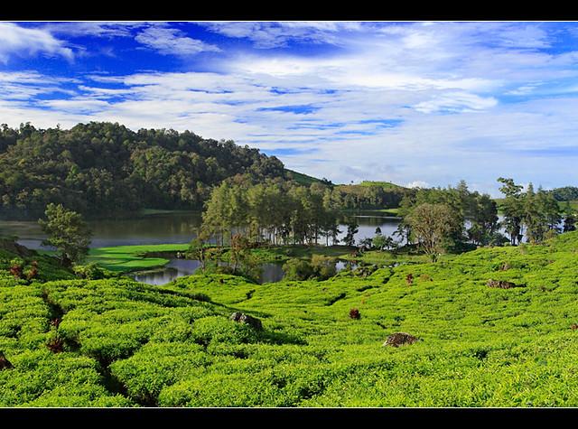 Lake Patengan & Tea Plantation