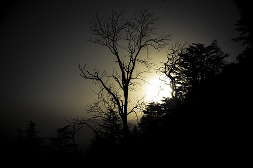 trees sun india mountains nature sunrise early hills himalayas mussoorie uttarakhand nikond40