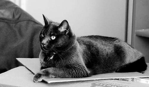 Judy cat