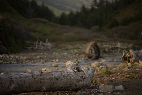 Cooksie Creek by AlwaysJanuary (Randy)