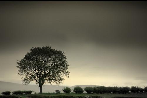 tree nature landscape scotland scenery