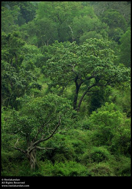 Marayoor Sandalwood Forest, Kerala | Marayoor is the only pl… | Flickr